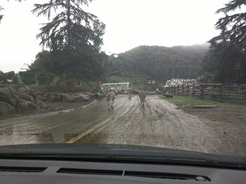 雨の日の群馬サファリパーク